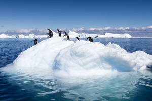 penguins-on-iceberg_124451722