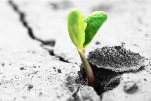sprouting-plant_85819054_600px