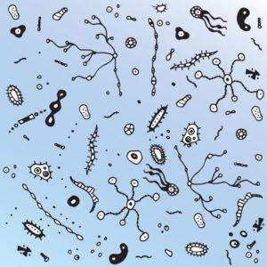bacteria_376163386_600px