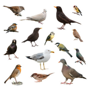 collage-of-birds_84873097_600px