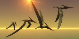 pteranodon_373793617_600px