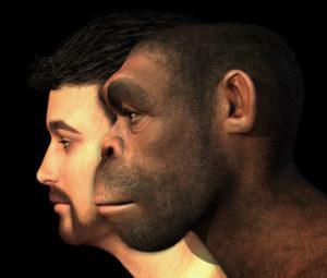 homo-erectus_119276947_600px