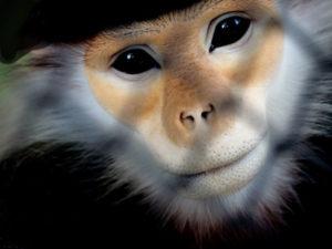 monkey_478806382_600px